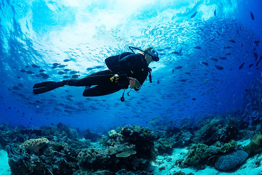 Our Services - Scuba Diver Swimming in the Ocean with a School of Fish